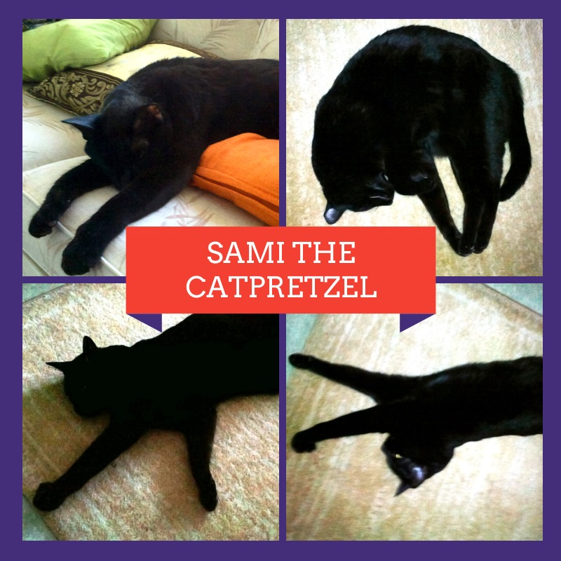 sami-the-catpretzel